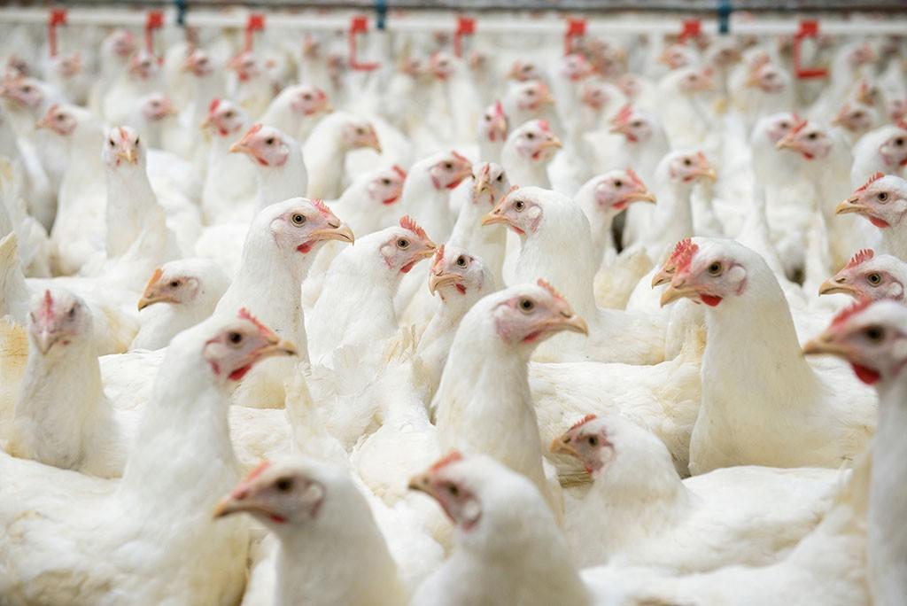Veterinariai vaistai neturėtų atsverti prastos naminių gyvūnų priežiūros ©AP Images/ European Union-EP